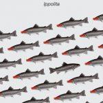 Colectivo Ippolita: En el acuario de Facebook