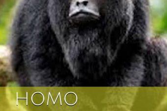 Crítica de Homo: el río perdido. Libros Prohibidos