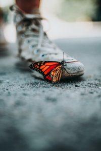 Mariposas. Libros Prohibidos