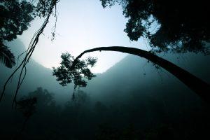 Proyecto Alfa. Bosque. Libros Prohibidos