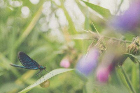 La sociedad de la libélila. Insecto. Libros Prohibidos