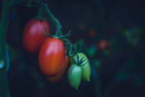 La ladrona de tomates. Rama. Libros Prohibidos