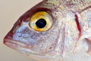 Pescador, ojo pez. Libros Prohibidos