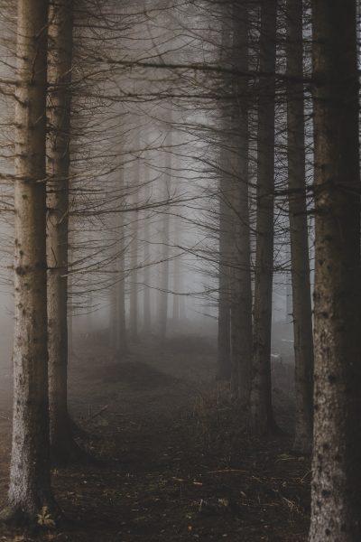 Tarantella. Bosque. Libros Prohibidos
