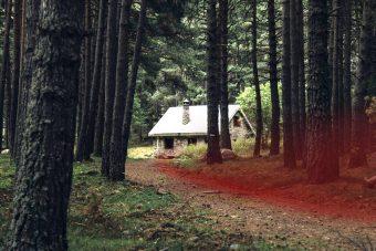 Bosque con trazo rojo
