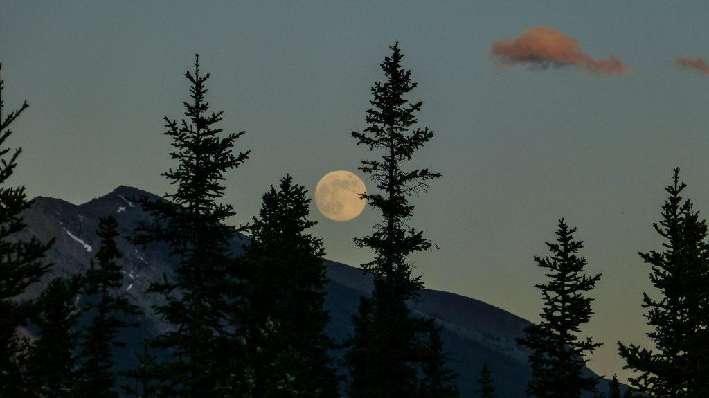 La luna tras las rejas. Luna. Libros prohibidos