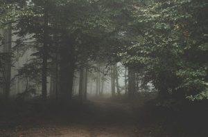 Twistedones.Bosque.LibrosProhibidos
