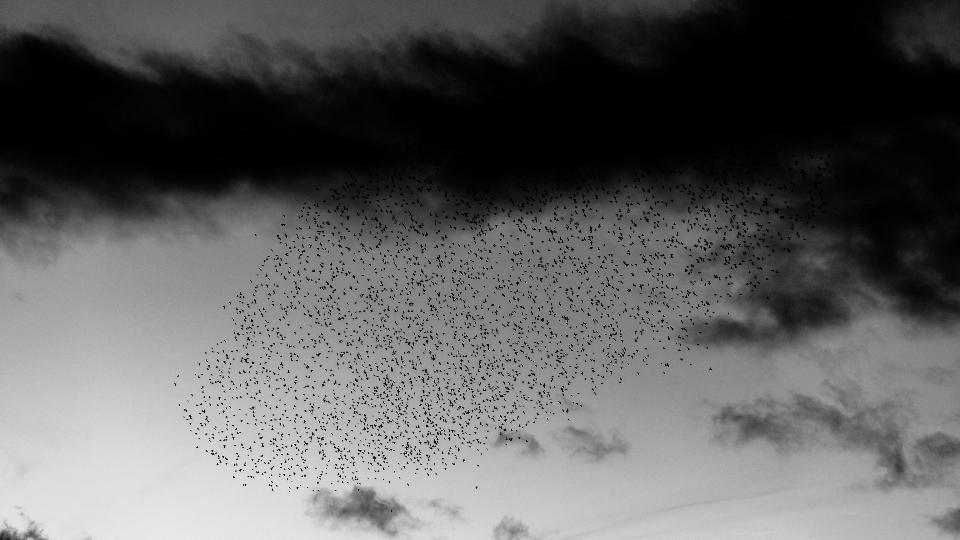 Héroes de la tierra yerma. Pájaros. Libros Prohibidos.